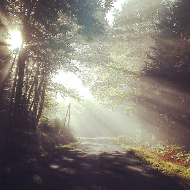 """Ce matin en """"partant au boulot"""", un air de forêt mystique sur la route ! #Auvergne #myauvergne #myauvergnerhonealpes #livradoisforez #forêt #sousbois #belleauvergne #surlarouteduboulot"""