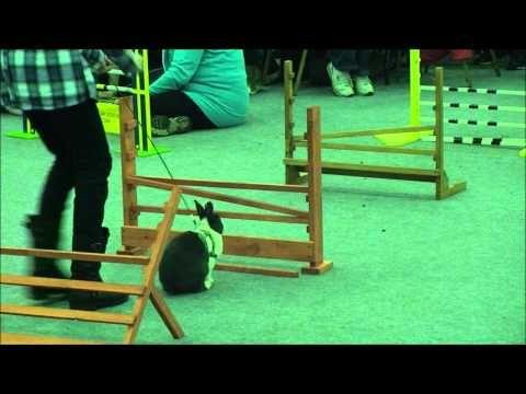 Best 10 Rabbit Breeds as Pets for Children | PetHelpful