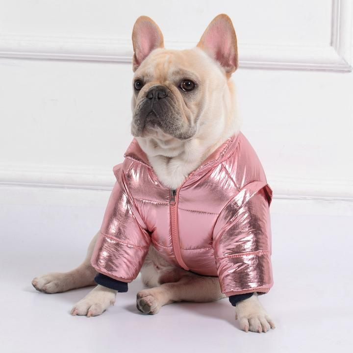 7 Finest French Bulldog Coats For 2019