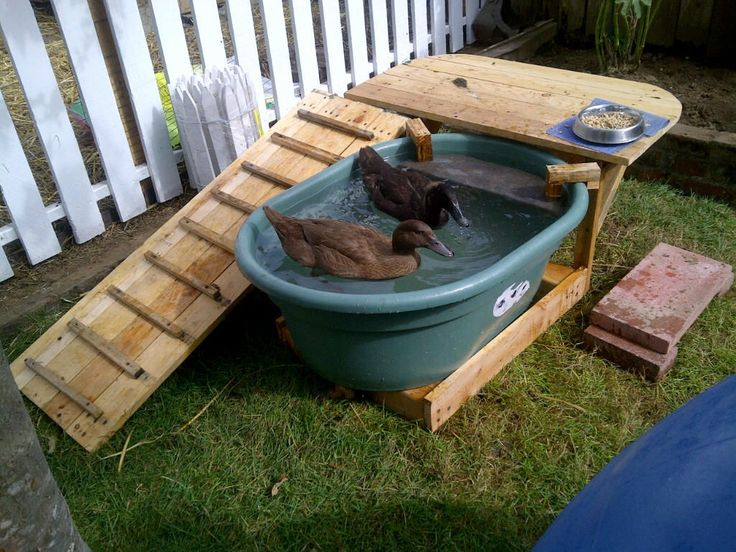 Diy duck pool deck too small for around here but a for Garten pool coop