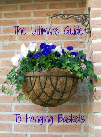 The Ultimate Guide to Hanging Baskets   Greener on the Inside