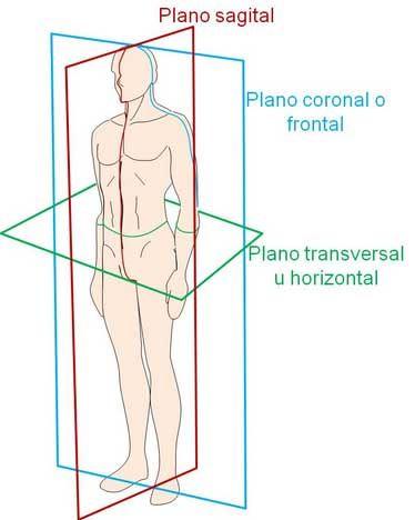 Posiciones anatómicas quirúrgicas y no quirúrgicas (básicas). Apréndelas todas fácil y rápido con ayuda de nuestras imágenes.