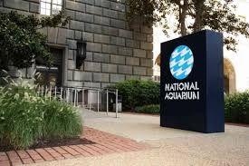 national aquarium baltimore branding - Google Search
