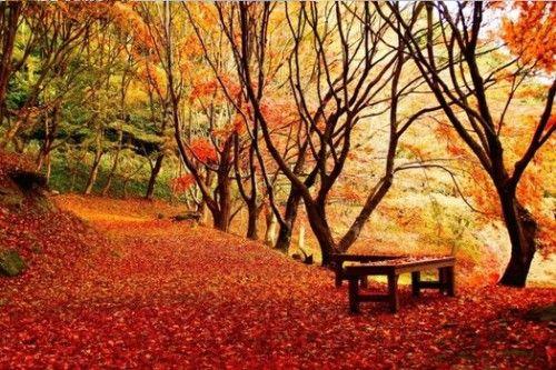 連日本人都大讚!7大必去經典賞楓景點 - 新鮮報 -福岡 河內藤園
