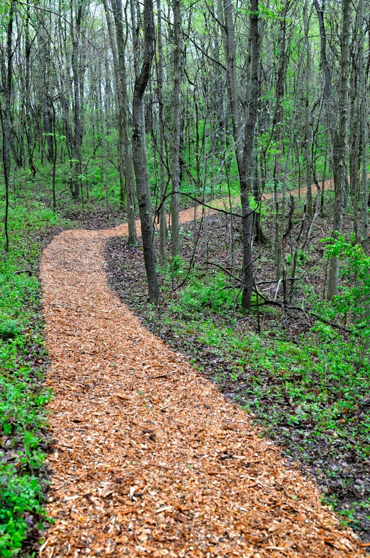 Pathways amp steppers sisson landscapes - Woodland Trail