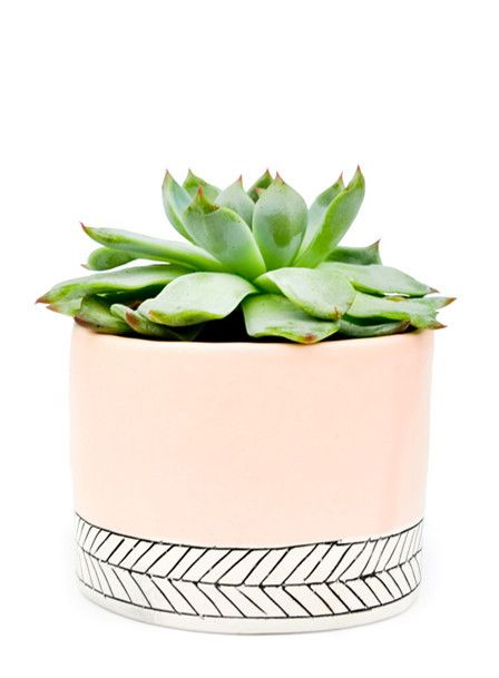 Pastel Herringbone Mini Planter