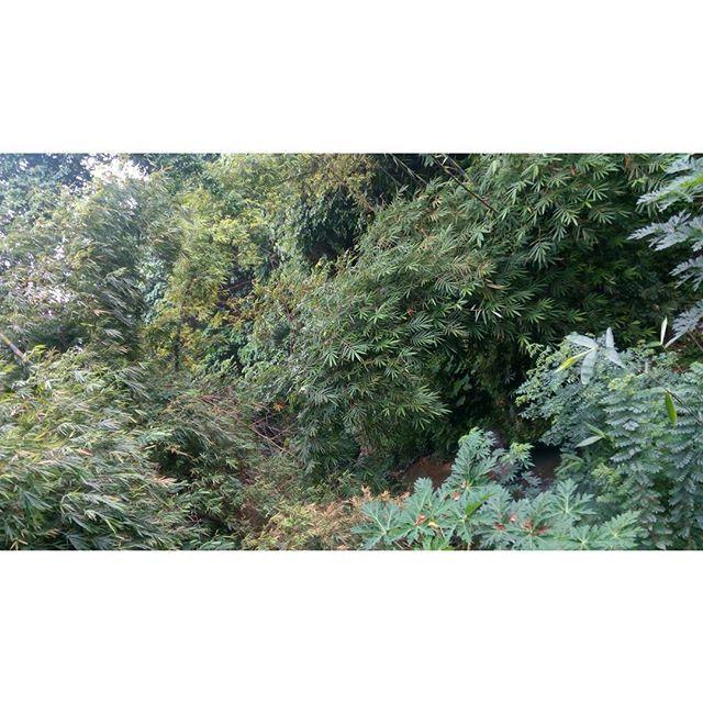Riverbank. Nice vegetation during rainy season.