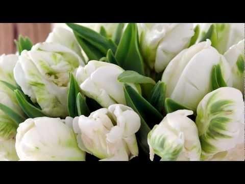 Pikkujoulusta pääsiäiseen - Kolmannen polven puutarhayrittäjä Hanna Helenius kertoo tulppaaninviljelystä -video