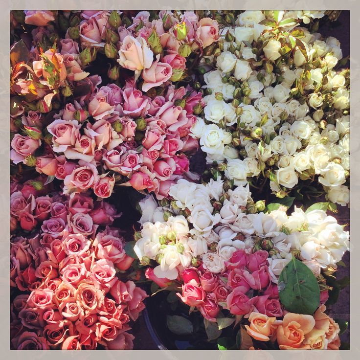 Flowers, Flowers, Flowers by @azbcreative