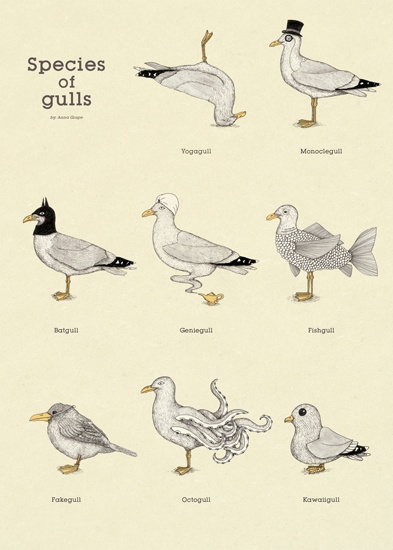 Anna Grape - Gulls