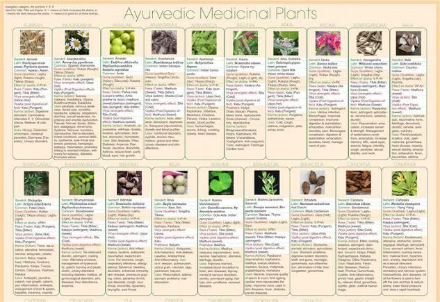 Ayurvedic Medicinal Plants - Keeping Healthy at Home.