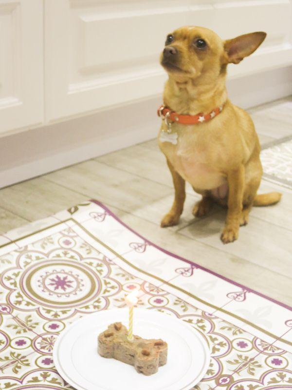 No-bake little dog cake made from grain free dry dog food, banana ...