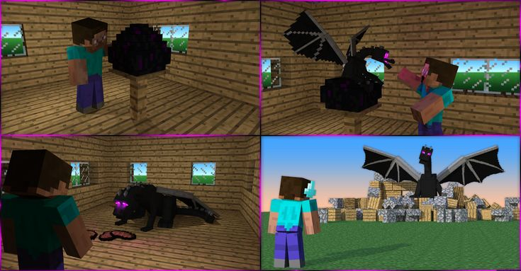 life with my pet ender dragon