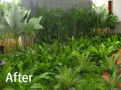 38 best strappy plants images on pinterest garden plants coastal compositions with ferns googleda ara altavistaventures Gallery
