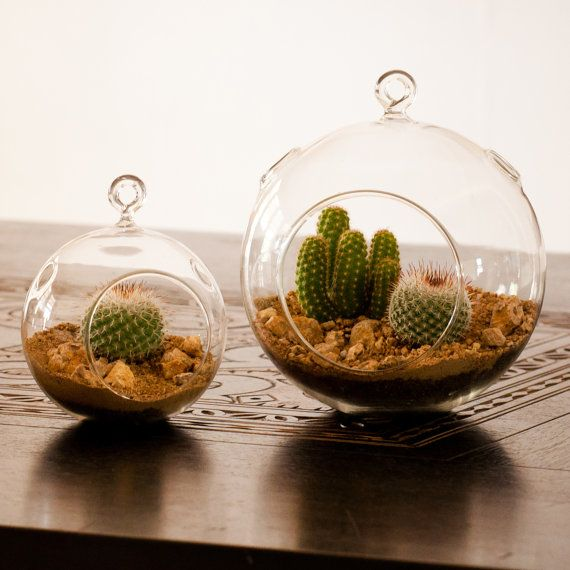 best 25 mini cactus plants ideas on pinterest mini cactus suculent plants and terrarium diy. Black Bedroom Furniture Sets. Home Design Ideas