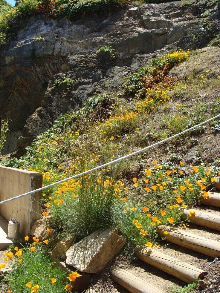 19 Best Garden Ideas Steep Slopes Images On Pinterest