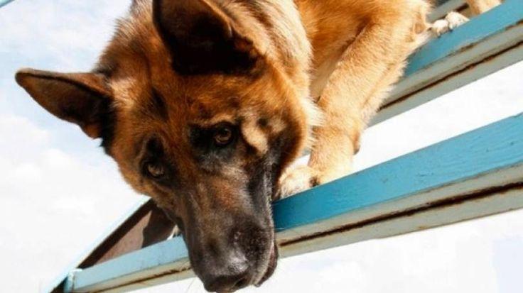Diagnóstico de câncer feito por cães é 98% confiável   EpHuman