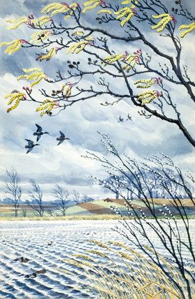Mallard drakes and alder branches: Ah, very nice! A lot of movement in this painting. Note by Roger Carrier