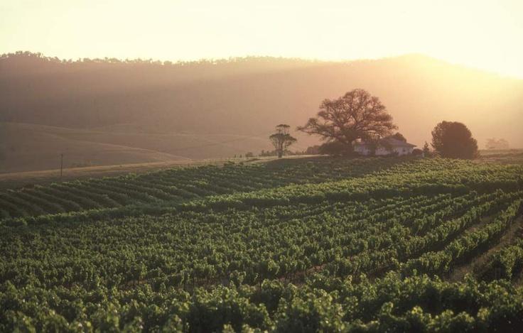 Cessnock vineyard #australia
