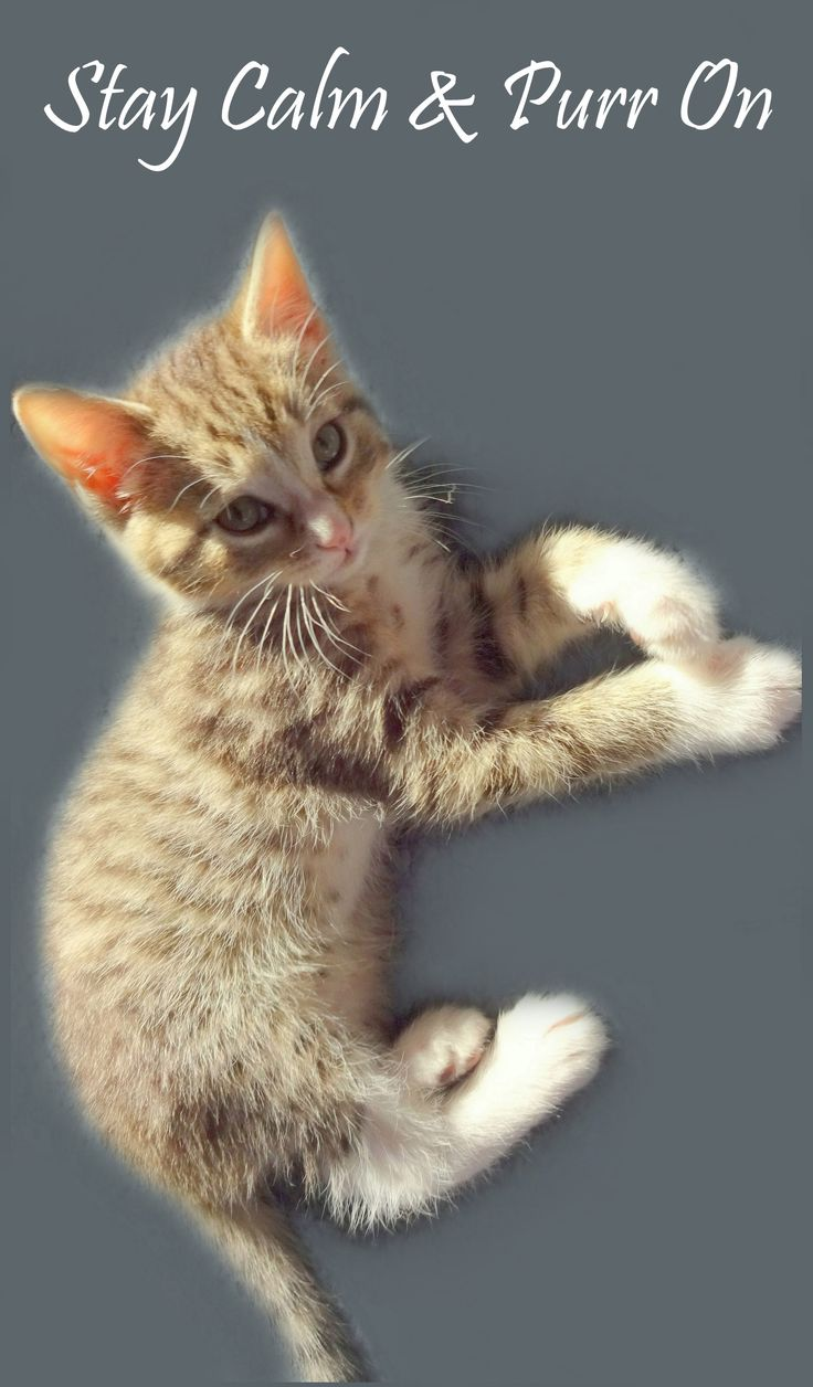 17 Terbaik Ide Tentang Crazy Cat Lady Meme Di Pinterest Anak