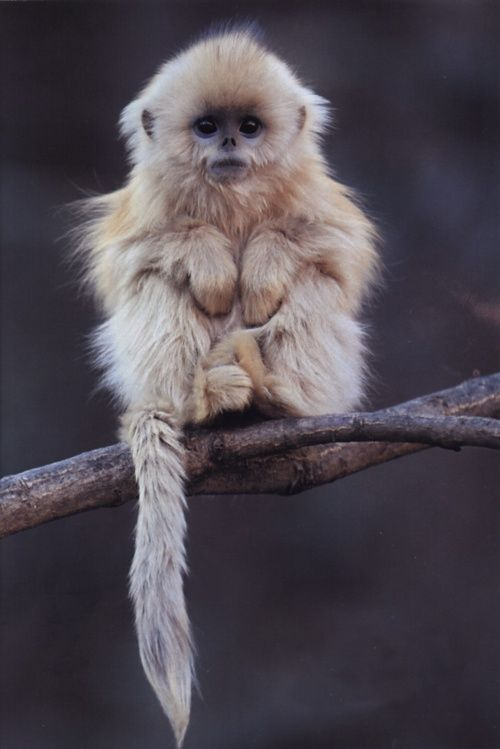 bah! cute monkey :D