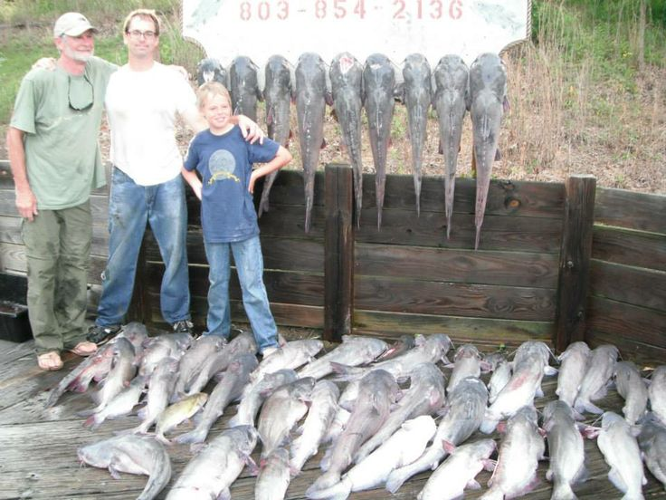 300 Hook Trotline 20 Hours In The Water 48 Catfish Over 600lbs Live Weight Every Fish On The