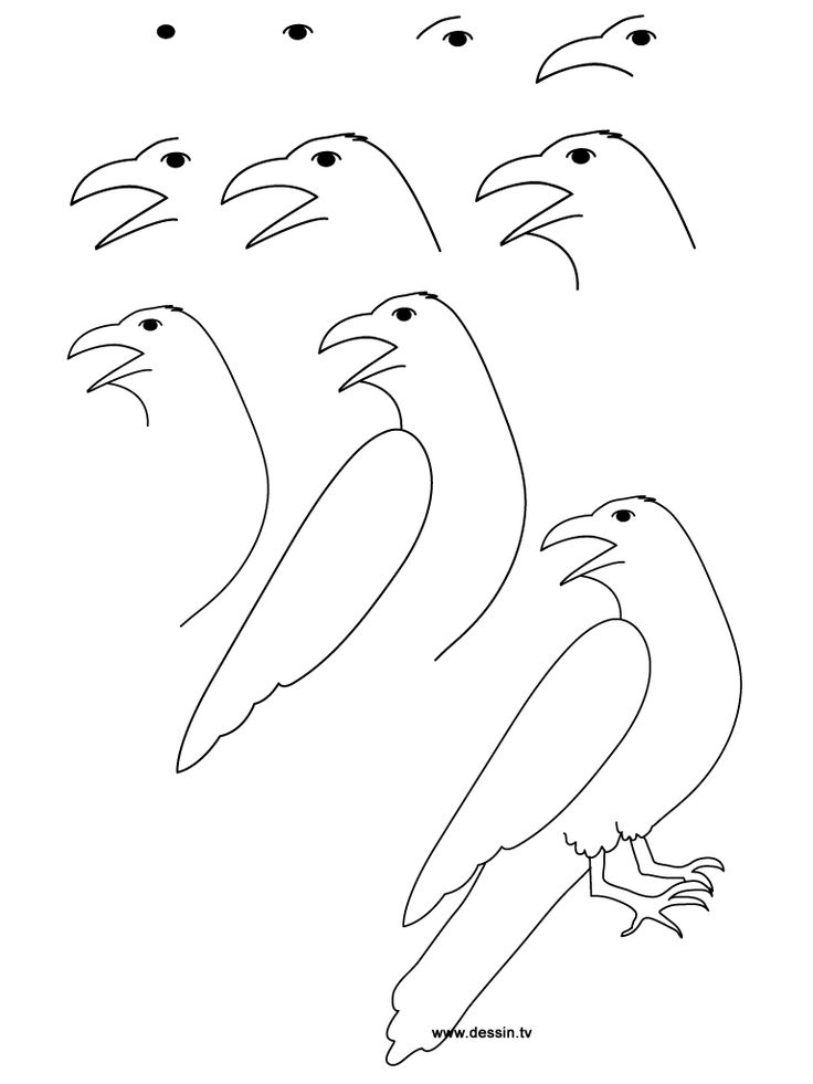 Drawing Raven Learn How To Draw A With Simple Step By Instructions The Drawbot Also Has Plenty Of And Coloring Pages