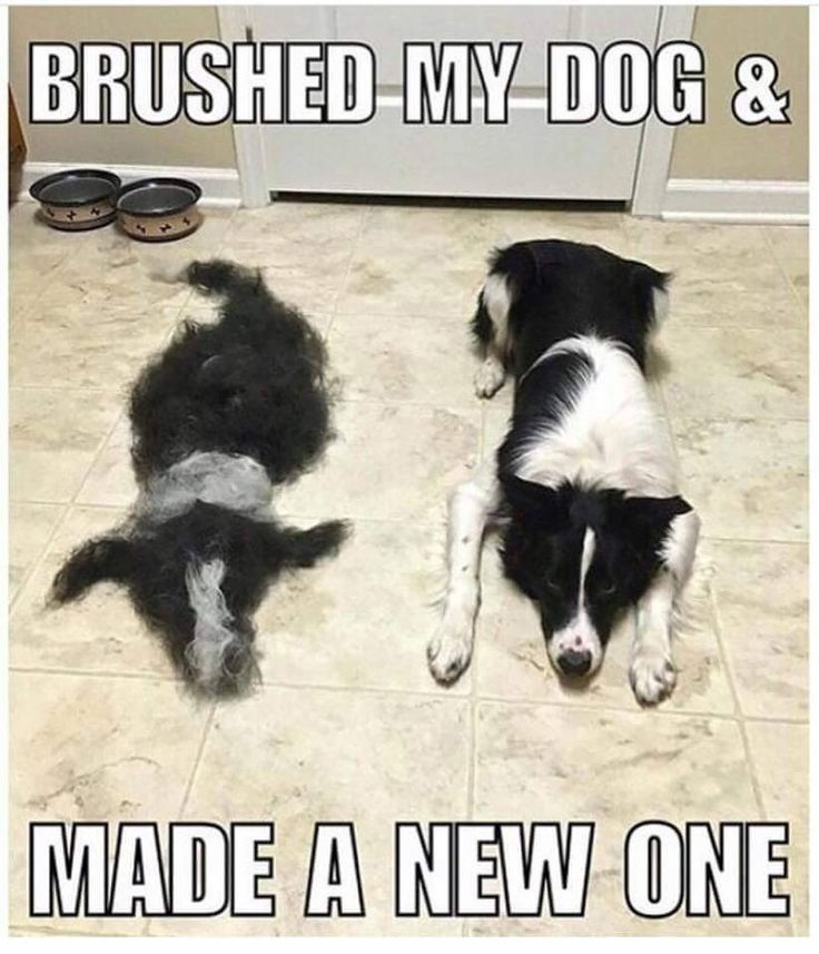 11 Best Funny Carpet Cleaning Images On Pinterest