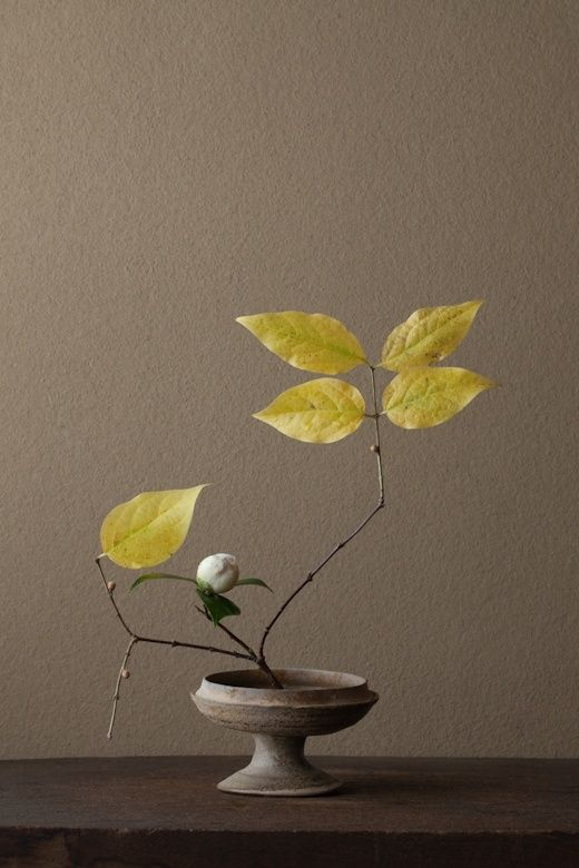 felixinclusis:  Ikebana by Toshiro Kawase  This background is very similar to my Current Choice in Wall Paint...Expedition Khaki, by Ralph Lauren...