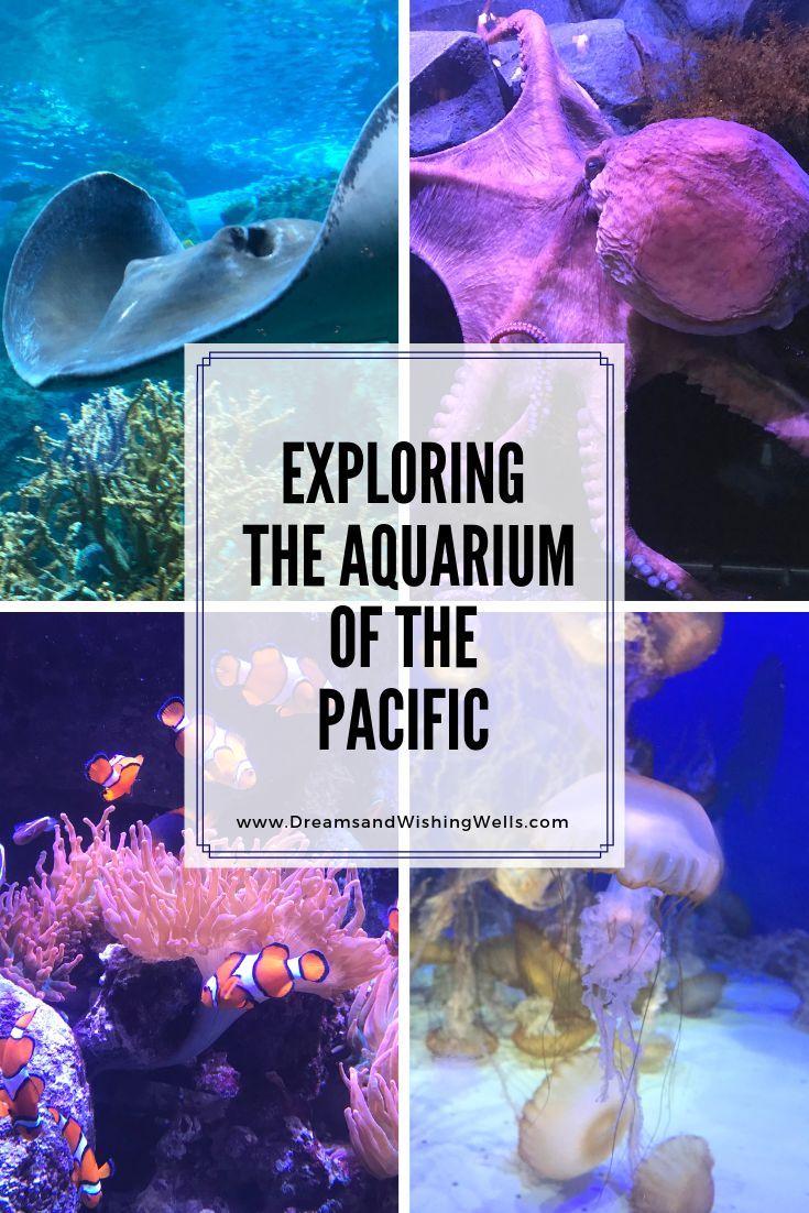 The Aquarium of the Pacific   Travel   California travel