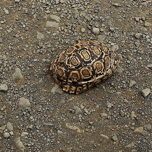 55 besten Kruger Park as seen by others Bilder auf Pinterest ...