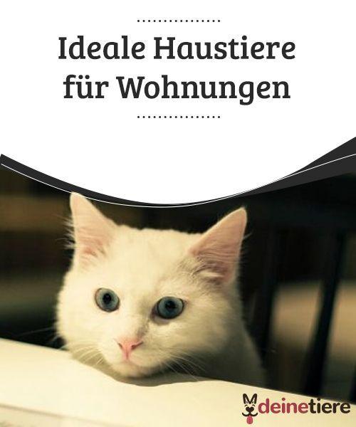 Ideale Haustiere Für Wohnungen Aktualität Cats