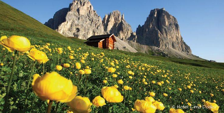 Vini e denominazioni Il Trentino è una regione unica nel suo genere, la presenza delle Dolomiti e del Lago di Garda e la successione delle diverse Ere Geologiche hanno plasmato il territorio suddividendolo in micro aree molto differenti e peculiari in termini di climi e composizione di terreni.  Questo insieme di variabili, potendosi combinare in molteplici