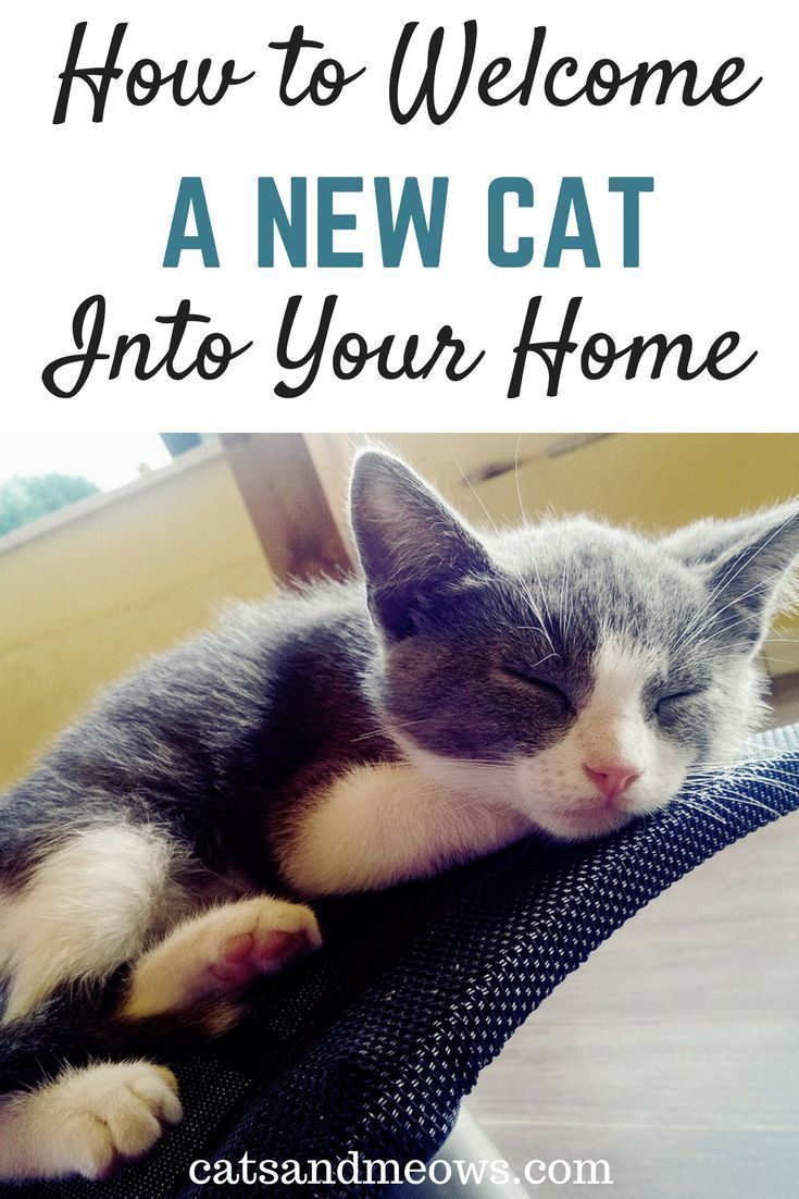 You Ve Chosen A Cat How To Welcome A Cat Into Your Home Cats And Meows Cat Parenting Cat Care Tips Cat Training