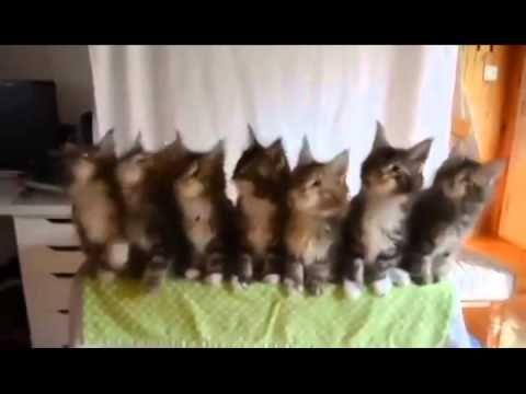Gatos bailando thriller - YouTube