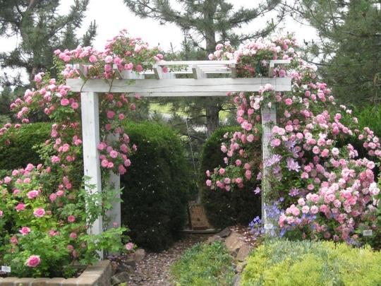 kent and rolayne rose garden