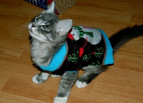 Cats in Christmas sweaters (10 photos)