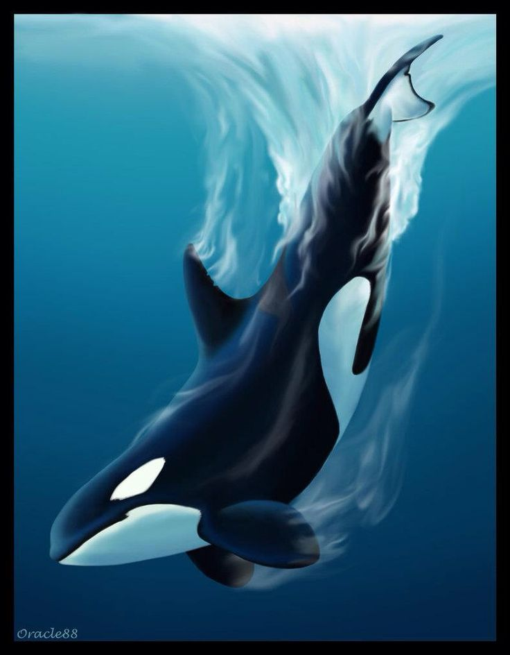 Orca Art                                                       …