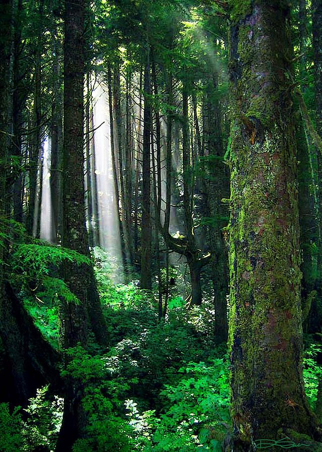 ✯ Sunlight filters through the rainforest in Olympic National Park, Washington