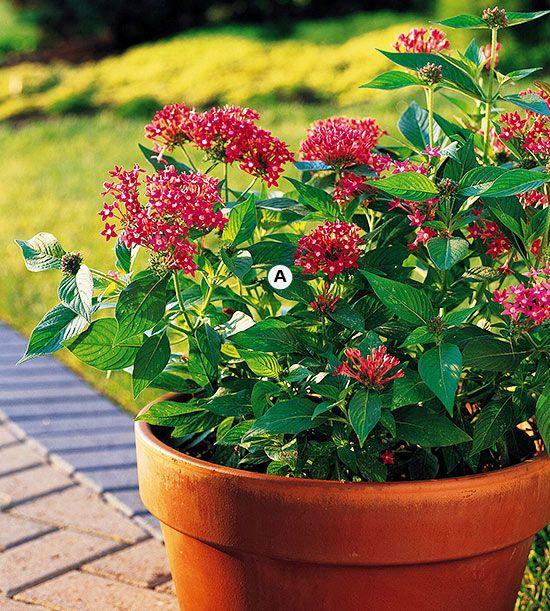 17 best images about butterflies hummingbirds birds and - Butterfly and hummingbird garden designs ...