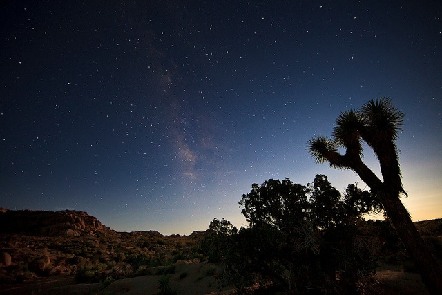 joshua tree by Eric 5D Mark III, via Flickr I used to