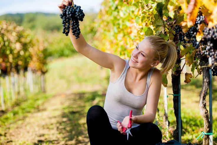 el resveratrol que está en la piel de las uva puede ayudar  a combatir la infertilidad