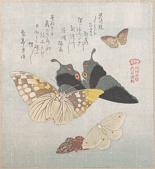 Various moths and butterflies  Kubo Shunman  (Japanese, 1757–1820)  Date: 19th century Culture: Japan Medium: Polychrome woodblock print (surimono); ink and color on paper