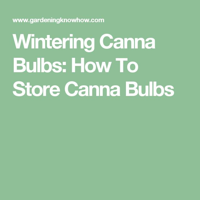 Wintering Canna Bulbs: How To Store Canna Bulbs