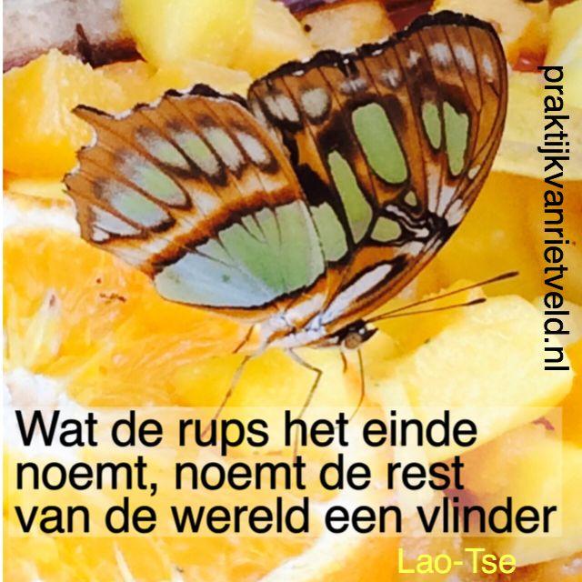 Citaten Over Inspiratie : Beste afbeeldingen over inspirerende nederlandse