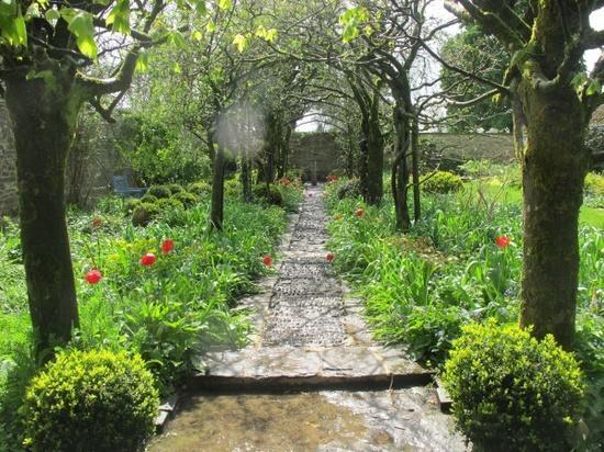 The Laburnum Walk, starting to come green at Barnsley House, UK