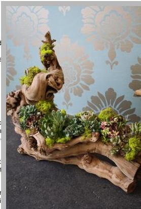 Succulent and grape vine