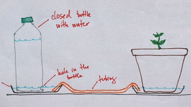 build a self-regulating, automatic plant watering system with a plastic bottle & a tray