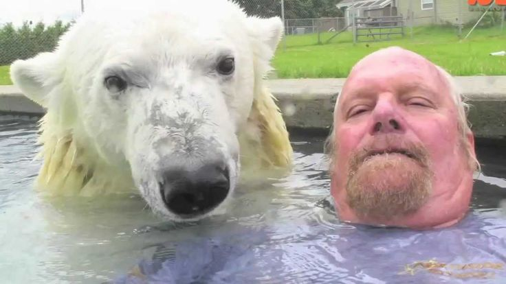 The Only Man In The World Who Can Swim With A Polar Bear: Grizzly Man.  Of course, this is a fairly young animal, and probably hand-raised.