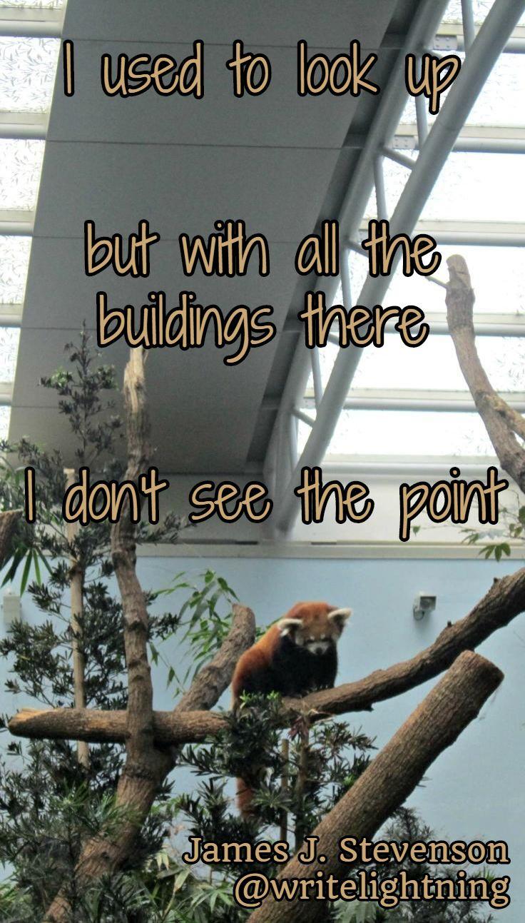 Red Panda haiku! Poetry by James J. Stevenson. For more: http://writelightning.tumblr.com/ and https://twitter.com/writelightning